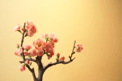 梅の花「Plum blossoms」:スマホ壁紙(17)