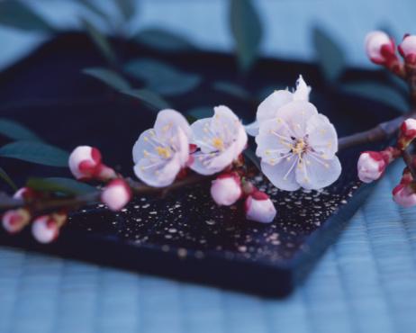 梅の花「Plum blossoms on the tray」:スマホ壁紙(1)