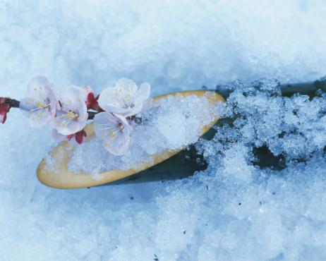 梅の花「Plum blossom and bamboo cylinder are covered with snow」:スマホ壁紙(9)