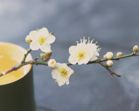 梅の花「Plum blossoms and bamboo cylinder」:スマホ壁紙(9)