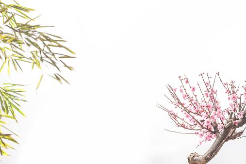 梅の花「Plum blossom and bamboo」:スマホ壁紙(15)