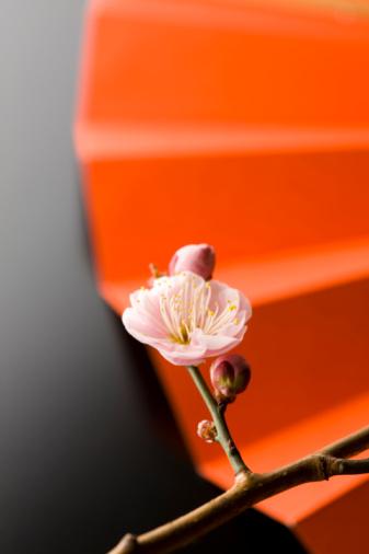 梅の花「Plum blossoms and a folding fan」:スマホ壁紙(4)