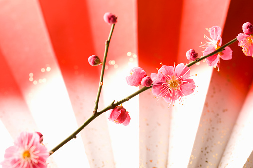 梅の花「Plum blossoms and a folding fan」:スマホ壁紙(8)