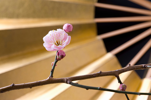 梅の花「Plum blossoms and a folding fan」:スマホ壁紙(16)