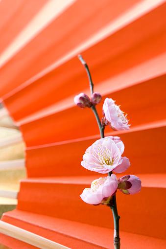 梅の花「Plum blossoms and a folding fan」:スマホ壁紙(15)