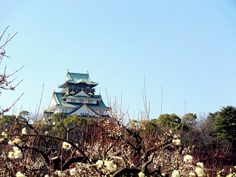 梅の花「Plum Blossoms and Osaka Castle」:スマホ壁紙(10)