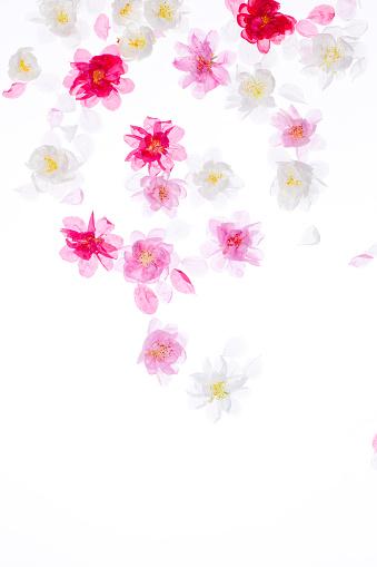 梅の花「Plum blossoms」:スマホ壁紙(10)