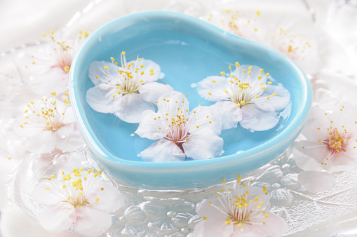 梅の花「Plum blossoms in heart shaped bowl」:スマホ壁紙(7)