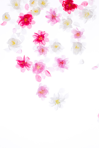 梅の花「Plum blossoms」:スマホ壁紙(16)