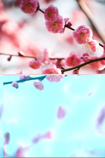 梅の花「梅の花」:スマホ壁紙(14)