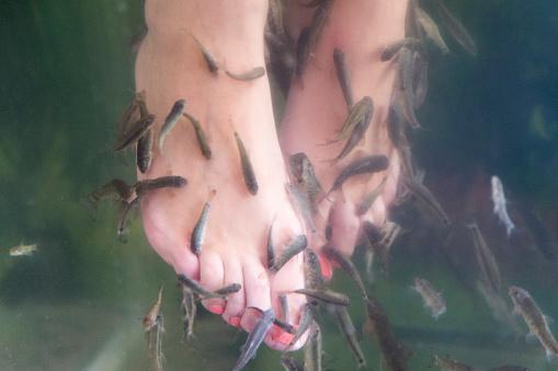 One Person「Feet-fish-Spa in Varberg, Sweden」:スマホ壁紙(19)