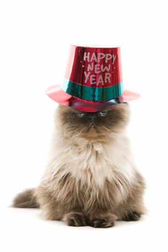 子猫「幸せな新年を」:スマホ壁紙(14)