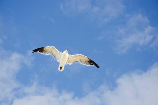 Glider「USA, Massachusetts, Cape Cod, Seagull flying against cloudy sky」:スマホ壁紙(17)