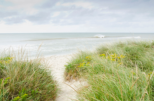 Island「USA, Massachusetts, Nantucket, Sandy beach overgrown with marram grass」:スマホ壁紙(11)