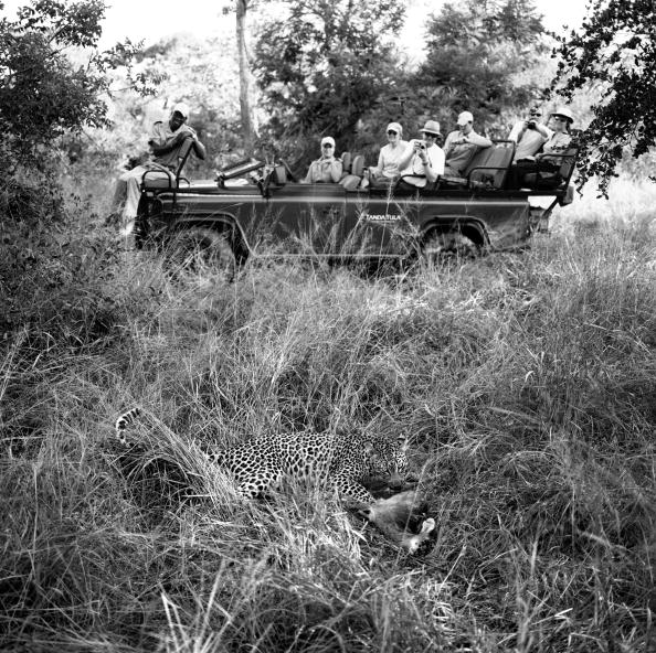 Animals Hunting「Kruger National Park」:写真・画像(6)[壁紙.com]