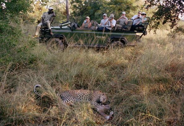 Animals Hunting「Kruger National Park」:写真・画像(7)[壁紙.com]