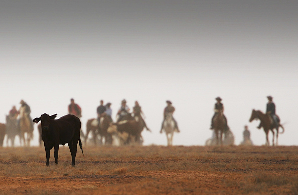 Focus On Foreground「Great Australian Cattle Drive Nears Completion」:写真・画像(14)[壁紙.com]