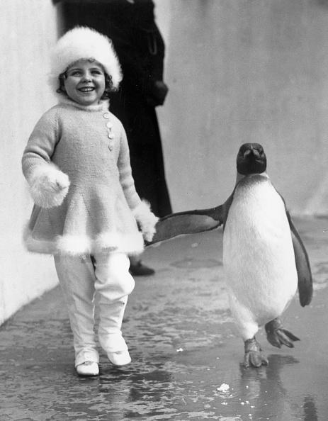 Cute「Penguin Pal」:写真・画像(17)[壁紙.com]