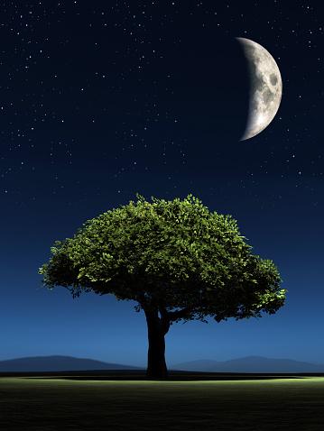 Single Tree「Quarter moon above a green tree」:スマホ壁紙(2)