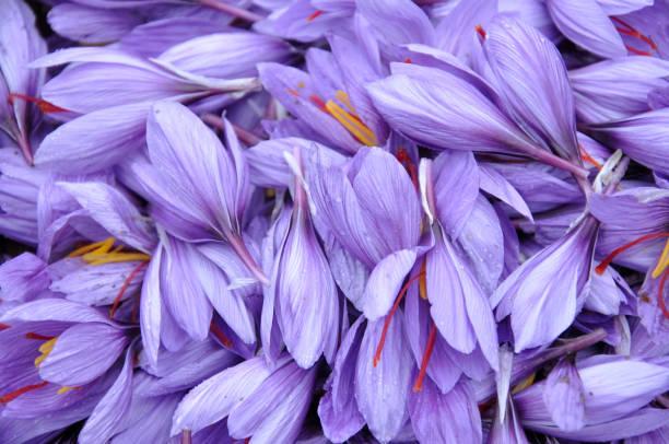 Saffron:ニュース(壁紙.com)
