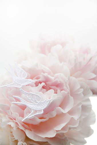 Peony「Pale pink peony and white lace textile in shape of bird」:スマホ壁紙(18)