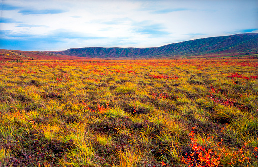 Tundra「Tundra changing color during arctic autumn in August - Tombstone mountains, Yukon, Canada」:スマホ壁紙(18)