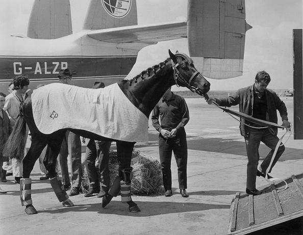 Horse「The Flying Horse」:写真・画像(14)[壁紙.com]