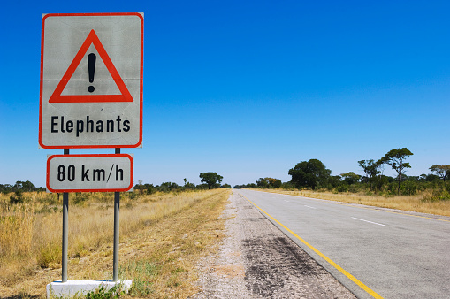 Caprivi Strip「Beware of elephants」:スマホ壁紙(12)