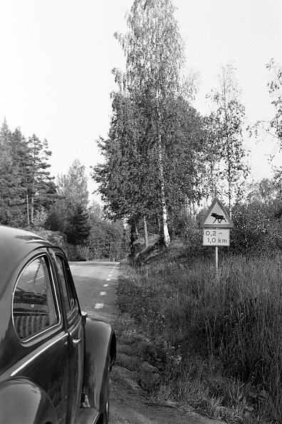 Red Deer - Animal「Journey Through Sweden」:写真・画像(3)[壁紙.com]