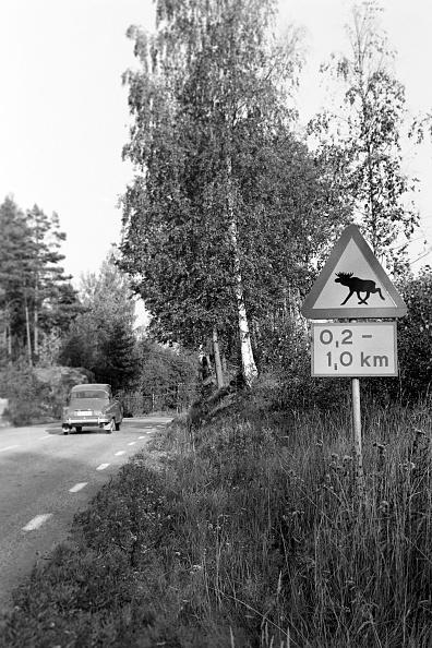 Red Deer - Animal「Journey Through Sweden」:写真・画像(12)[壁紙.com]