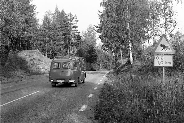 Red Deer - Animal「Journey Through Sweden」:写真・画像(4)[壁紙.com]