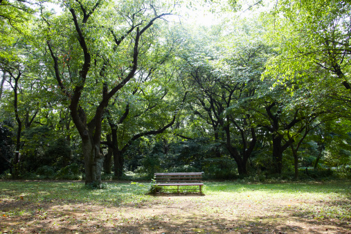 Forest「Bench in forest.」:スマホ壁紙(18)