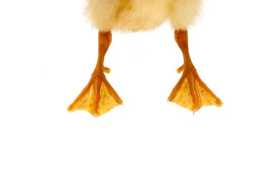 Carefree「Feet of a duck」:スマホ壁紙(13)
