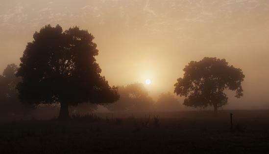 France「Trees in field with hazy sunshine」:スマホ壁紙(18)