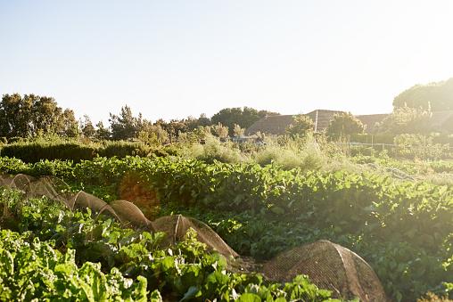 Midday「Farming season is here」:スマホ壁紙(3)