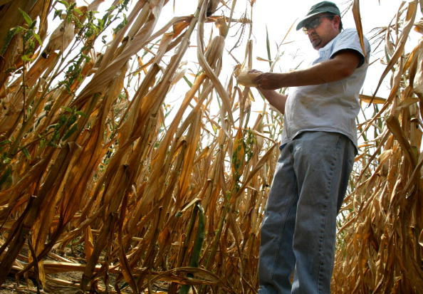 Blank「Dry Conditions Dry Up Corn in MD」:写真・画像(4)[壁紙.com]