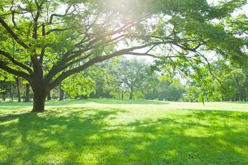 Grass「Sunny park」:スマホ壁紙(9)