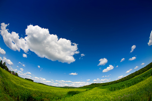 Wide Angle「Field on Sunny Day, Fisheye」:スマホ壁紙(12)
