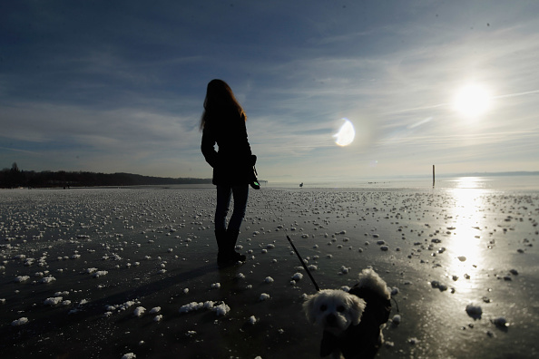 動物「Visitors Enjoy Frozen Bavarian Lake」:写真・画像(18)[壁紙.com]