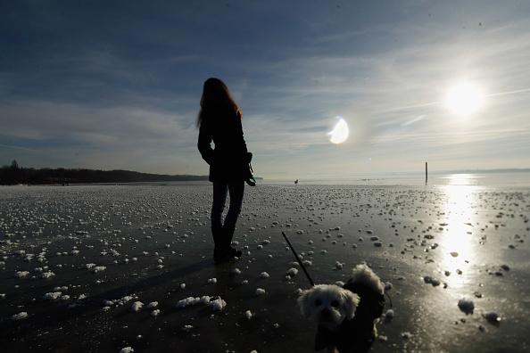 動物「Visitors Enjoy Frozen Bavarian Lake」:写真・画像(8)[壁紙.com]