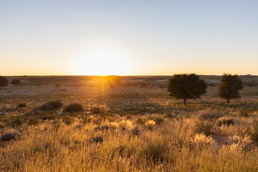 Hope - Concept「Botswana, Kgalagadi Transfrontier Park, Kalahari, landscape at sunrise」:スマホ壁紙(16)
