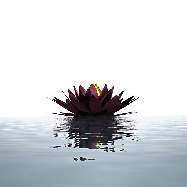 Lotus flower floating on the water surface:スマホ壁紙(壁紙.com)