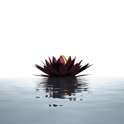 Water Lily「Lotus flower floating on the water surface」:スマホ壁紙(16)