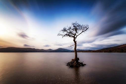 Single Tree「Great Britain, Scotland, Loch Lomond, Milarrochy Bay, Lone tree」:スマホ壁紙(6)