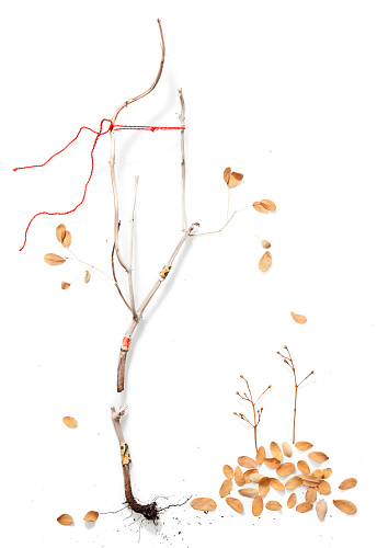 秋「Dry branch with scattered autumn leaves」:スマホ壁紙(11)