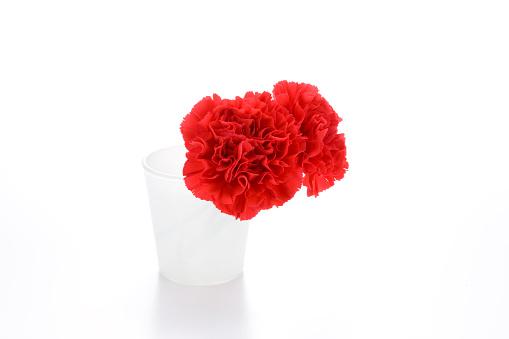 カーネーション「Two carnations in a vase」:スマホ壁紙(18)