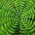 Temperate Rainforest壁紙の画像(壁紙.com)