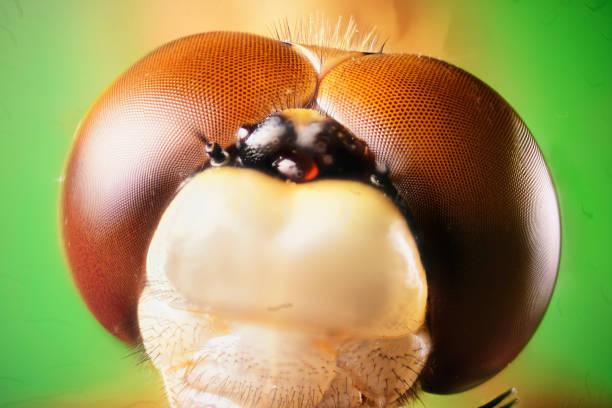 Dragonfly eye:スマホ壁紙(壁紙.com)