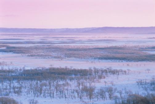 雪「Clusters of Bare Trees in a Snowy Field at Sunrise. Kushiro, Hokkaido, Japan」:スマホ壁紙(5)