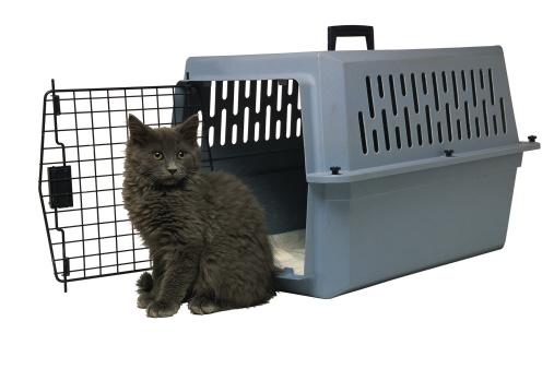 Kitten「Studio shot of cat and pet carrier」:スマホ壁紙(18)